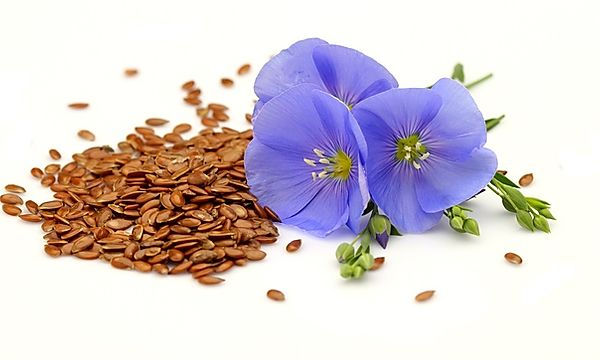 Flax-Seeds-With-Purple-Flower.jpg