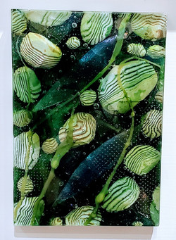 Green Deep Tide