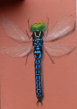 A. BnB dragonfly by Rowdy