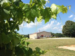 Cauble Creek Vineyard
