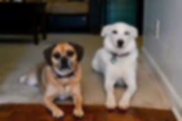 HELP PLEASE! My two dogs; Sugar and Chub