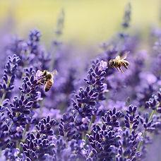 bees-bloom-blossom-164470.jpg