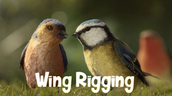 Wing Rigging