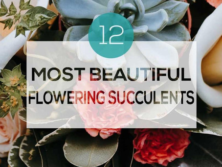 12 MOST BEAUTIFUL FLOWERING SUCCULENTS
