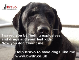 Bravo Working Dog Rescue Urgent Appeal