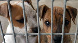 Our Comments on todays MP Debate on Banning Of selling Puppies and Kittens in Pet Shops