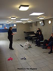 dog training behaviour courses for rescue volunteers staff