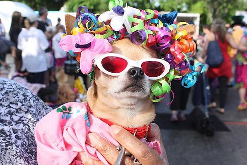 Pooch-Parade.jpg