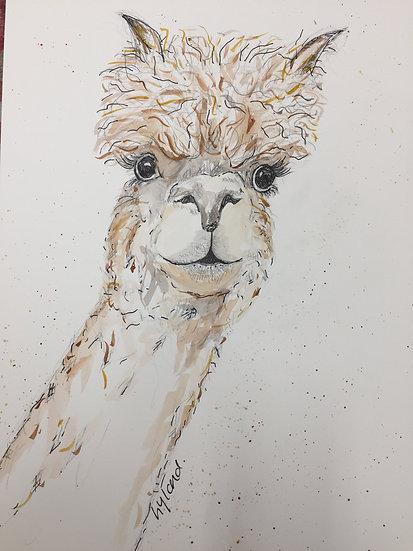 Alpaca - Pen & Watercolour