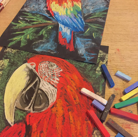 Parrot in Pastels