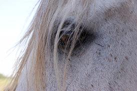 Paardencoaching door Jubine Nijmeijer