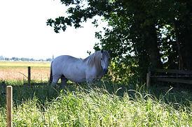 Jubine Nijmeijer Horse Medicine