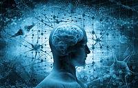 Neuosciences Rodolphe Tahanout