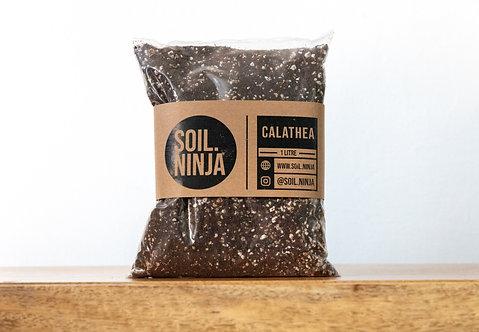 Premium Calathea & Maranta Mix