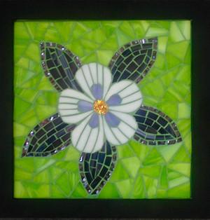 Colorado State Flower