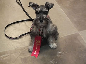 Tootsie+2nd+place+over+all.jpg