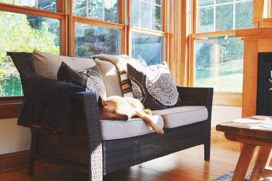 5 LIFE LESSONS TO LEARN FROM YOUR DOG