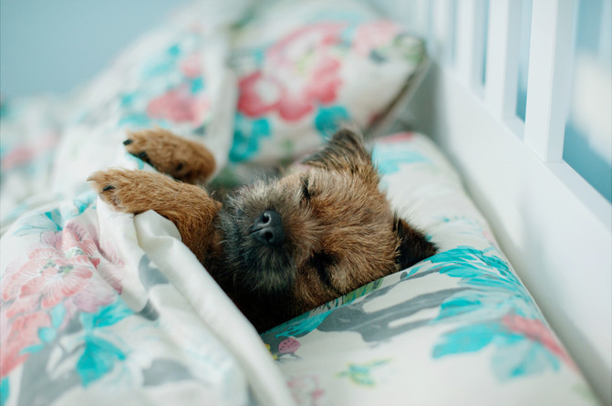 Should You Let Your Pup Sleep In Your Bed?