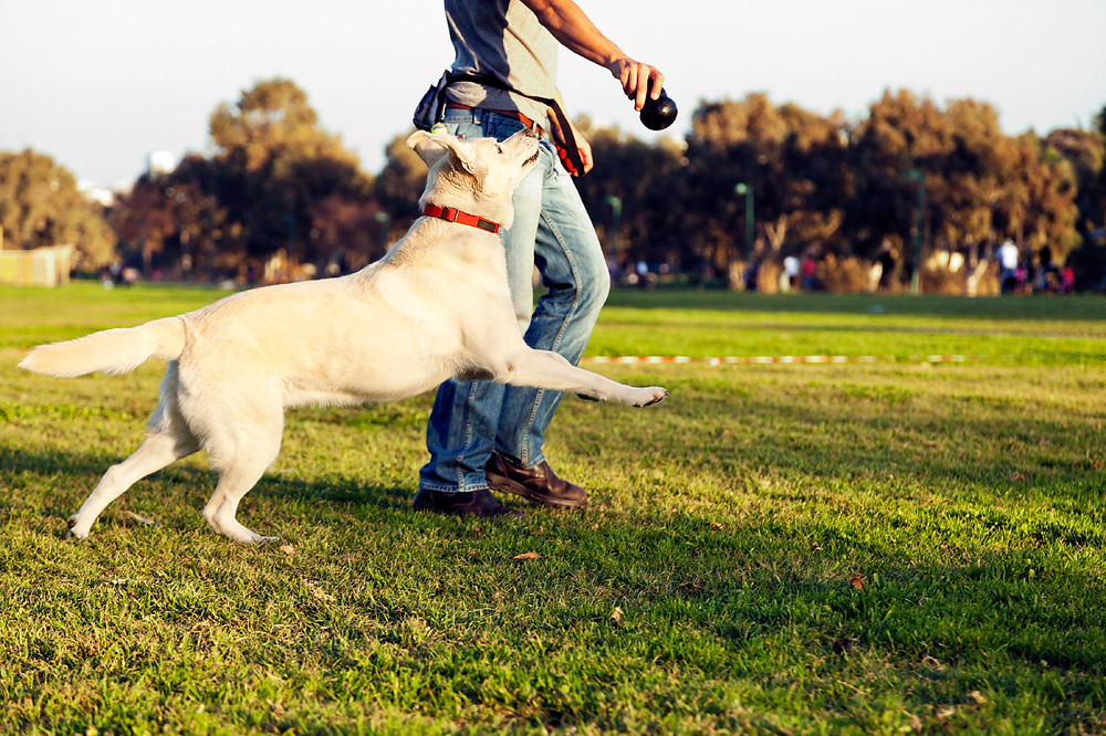 Here are some ideas to bond with your dog this summer! (Thanks woofreport.com)