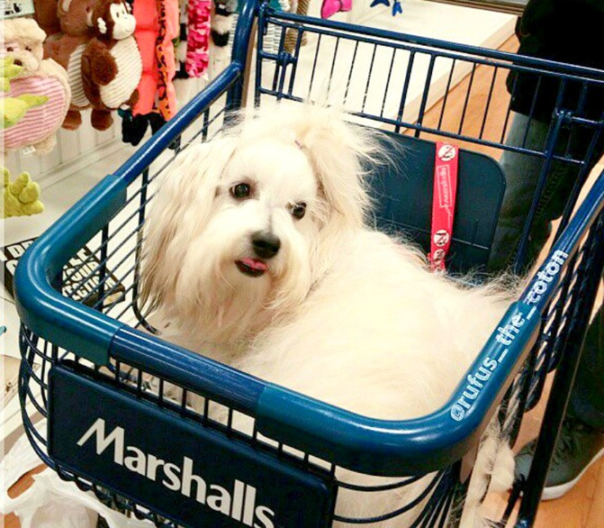 33 Stores That Don't Ask You To Leave Your Dog Outside While You Shop