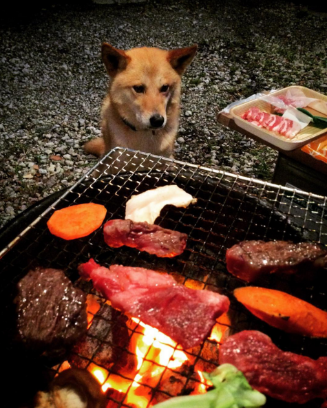 The Ultimate Guide to BBQ for Dogs and Their Owners (Plus Recipes!)