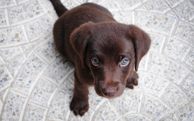 How To House Train a Puppy: The Basics