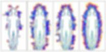 senscan2.jpg