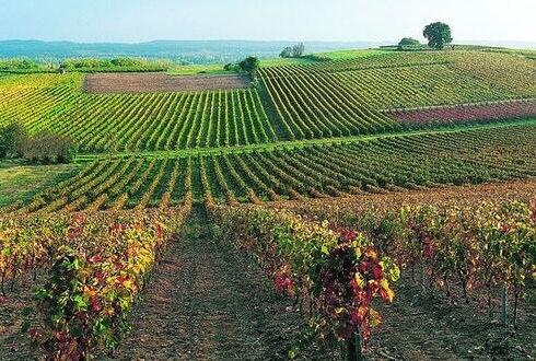 Les2Cabanes vignobes de Gaillac