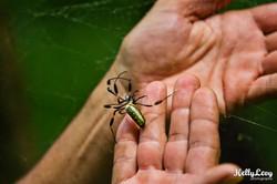 Big Spider. Corcovado, CR