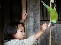 Girl feeding bird. Northern Thailand
