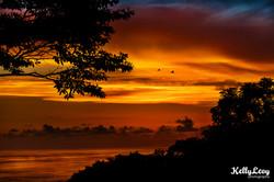 TreeOfLife Sunset. Dominicalito, CR
