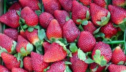 Seasonal Farm Fresh Produce