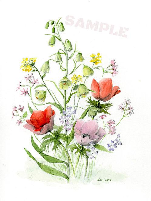 Galilee Flowers 2005