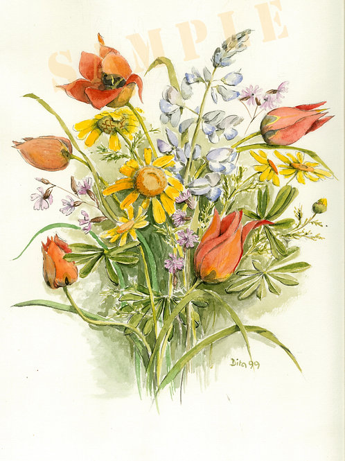 Tulip 1999