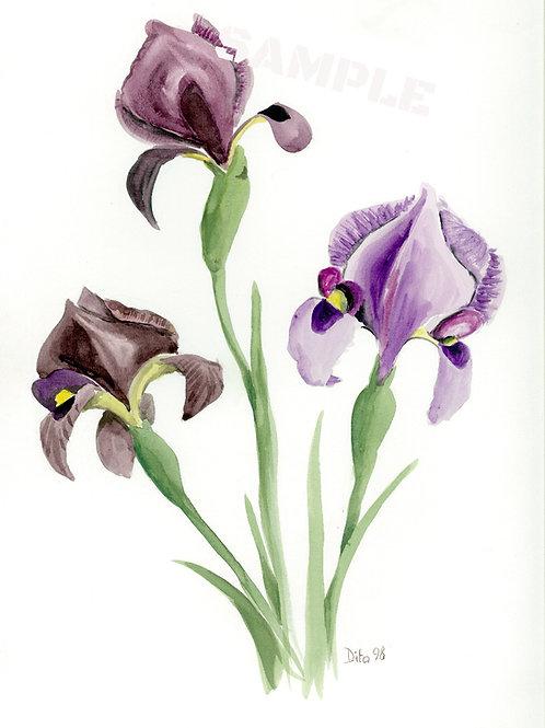 Purple Iris 1998