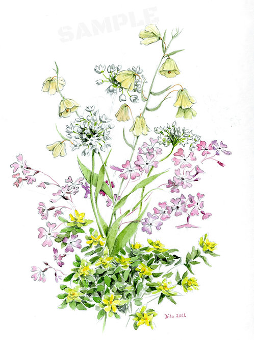 Galilee Flowers 2002