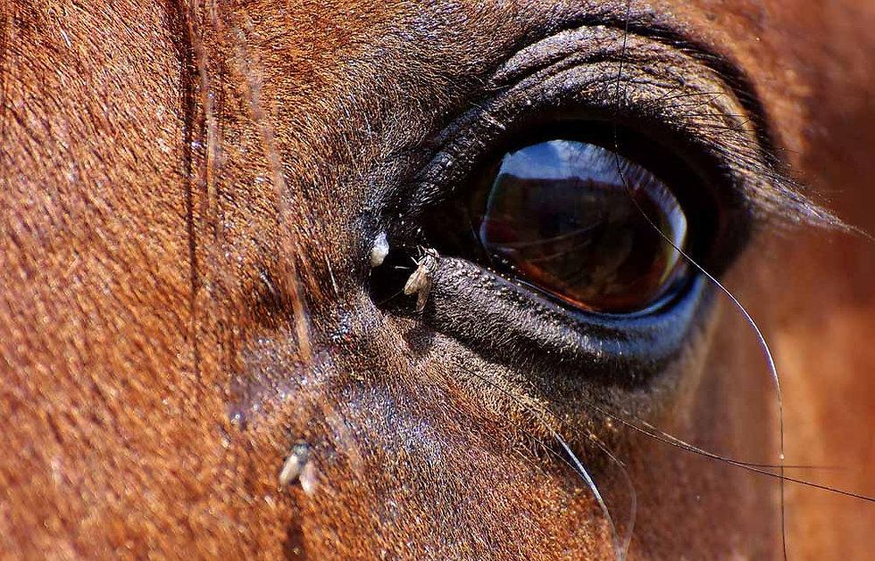 horse-2776813_1280.jpg