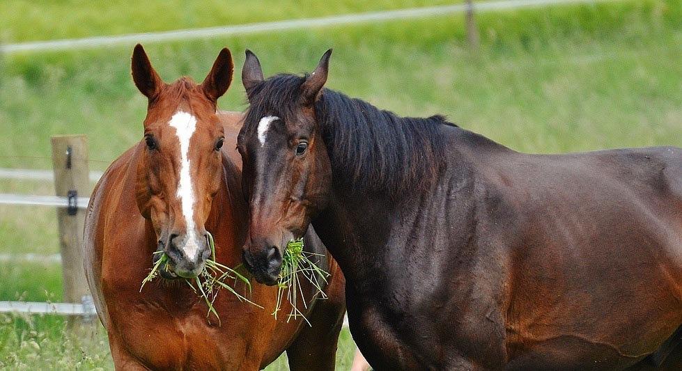 horses-1423802_1280_bearbeitet-1.jpg