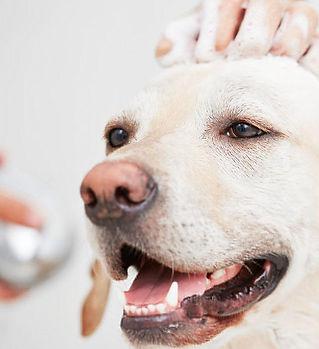 dog-grooming-louisville_1486.jpg