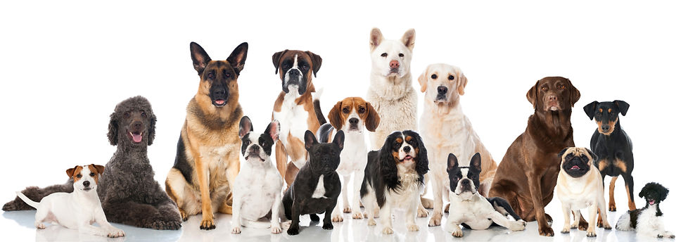 Large group of different breed dogs