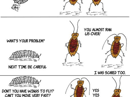 Pill Bug Says Hi to the Cucarachas