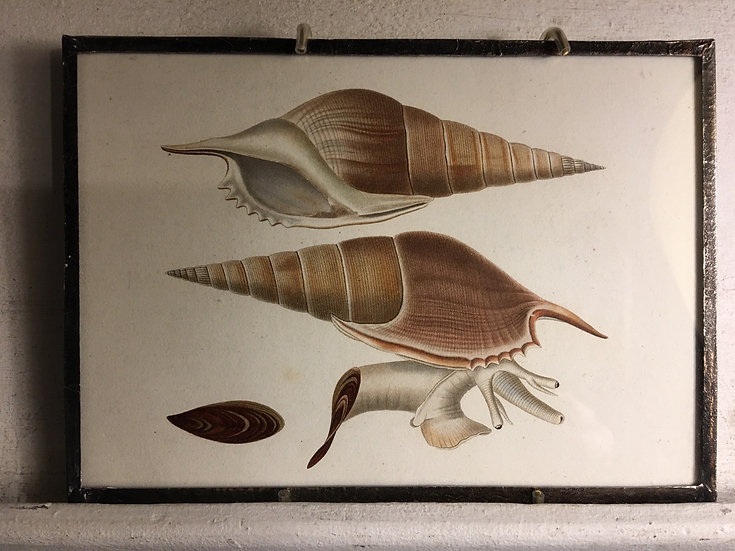 Early 1800s Snail Book Plate