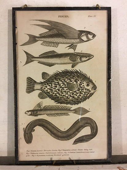 "Small Antique ""Pisces"" Book Plate"