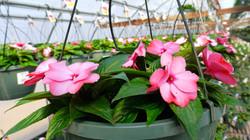 Small Greenhouse April