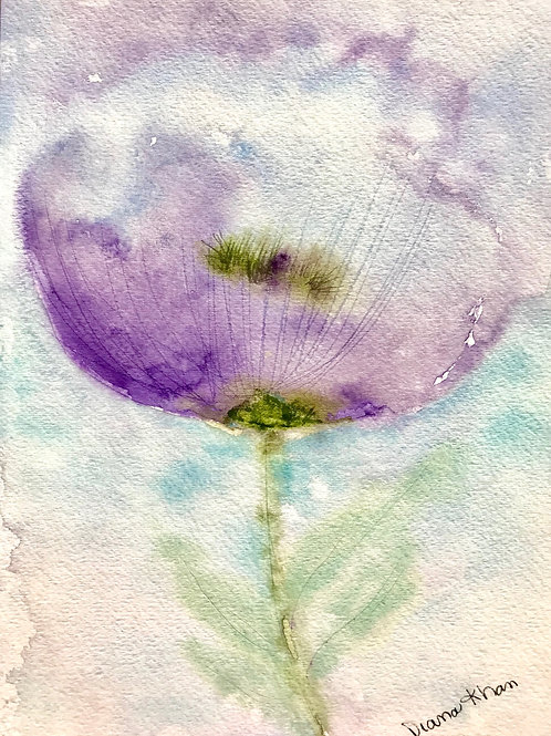 Celestial Poppy
