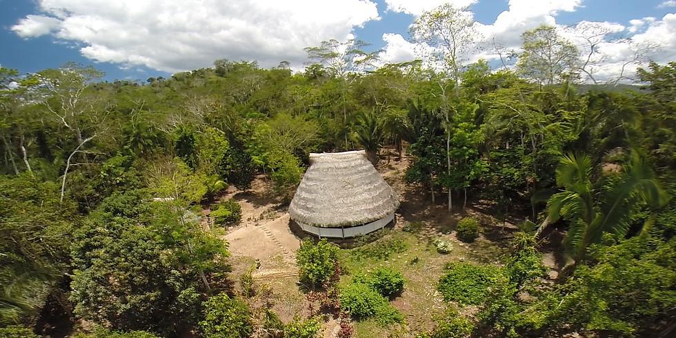 Heilpflanzenkur in Peru