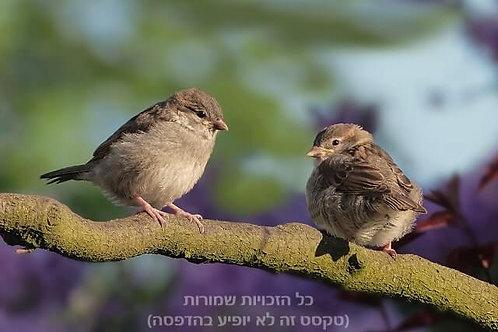 שניים על העץ