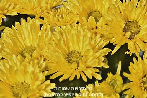 פריחה בצהוב