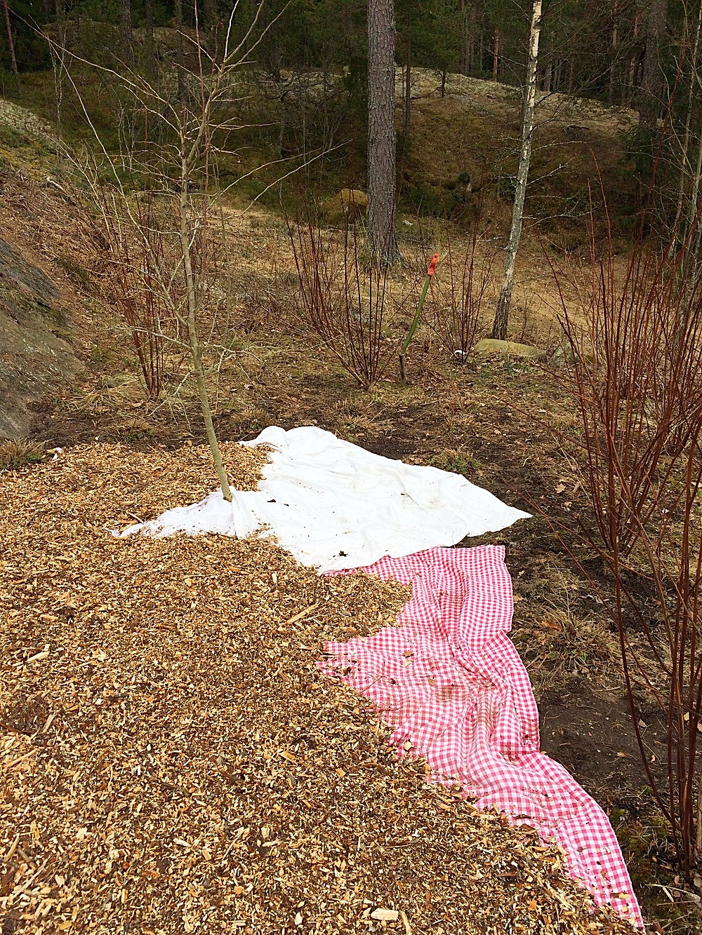 Covering up bare soil with cloth and mulch