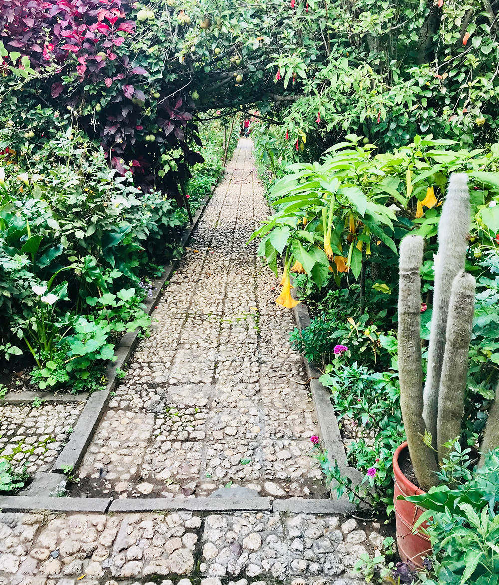 Cactus and angels trumpet line a path